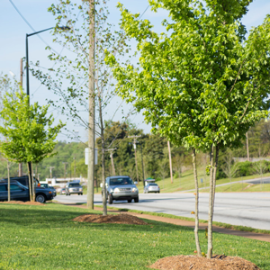 Photo of trees along Wade Hampton Boulevard