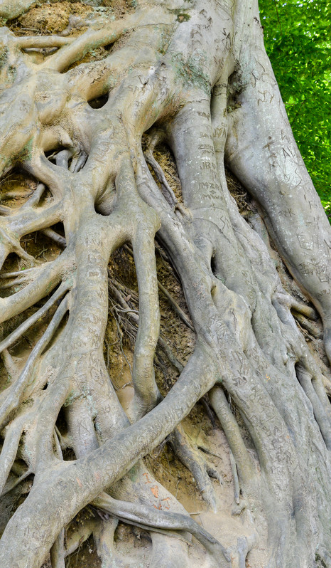photo of tree roots